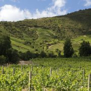 Apalta Estate___Montes__Colchagua Valley